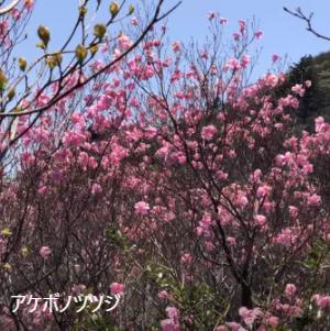 Futatsudake04.png